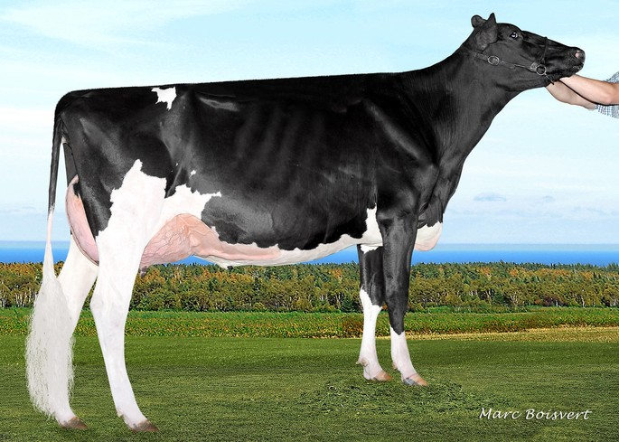 Rayon D'or Lauthority Léanna VG-86-2YR X<br />Gold Chip